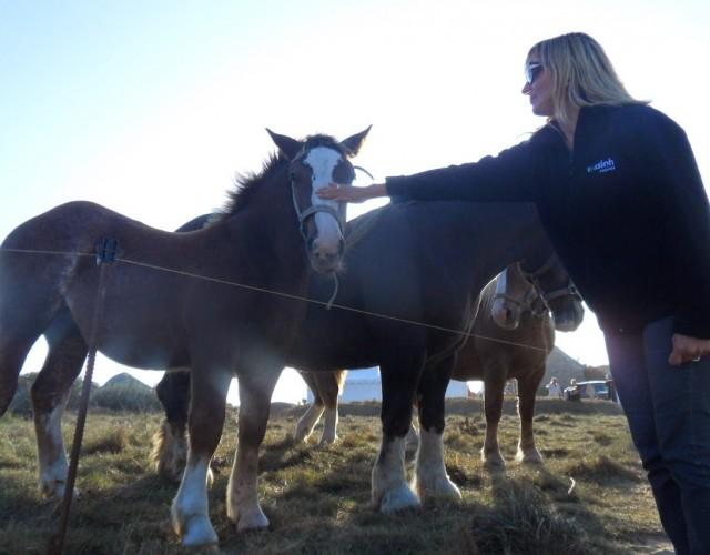 cheval-meneham