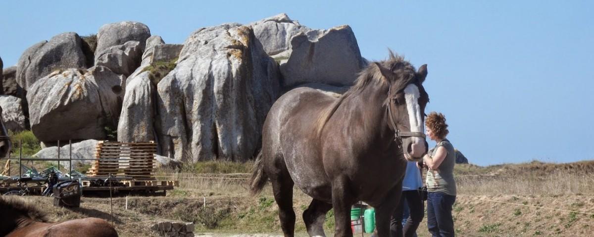 meneham-chevaux